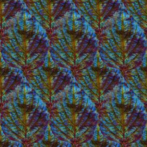 Coleus Leaf 5