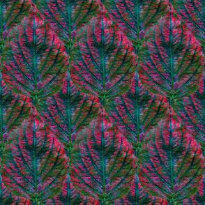 Coleus Leaf 6