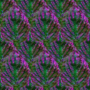 Coleus Leaf 7