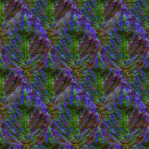 Coleus Leaf 8