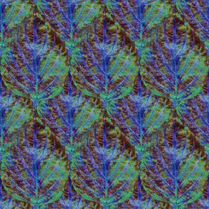 Coleus Leaf 9
