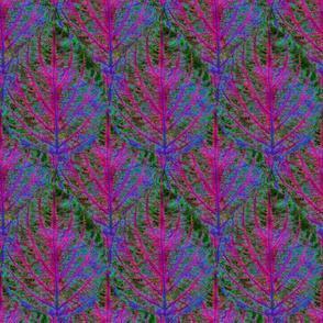 Coleus Leaf 11