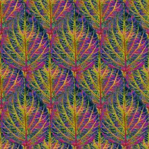 Coleus Leaf 13