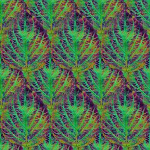 Coleus Leaf 15