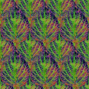 Coleus Leaf 16