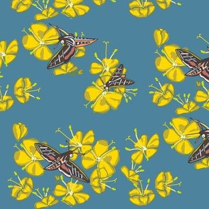 sphinx moth + primrose [slate]