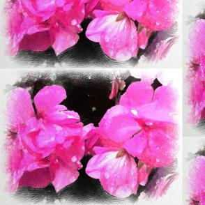 Floral Pink Begonia