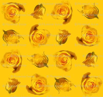 Saffron_roses