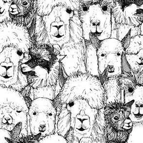 just alpacas black white