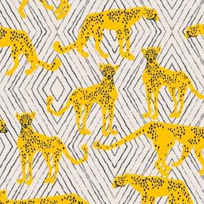 bebe_cheetah