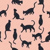 bebe_kitten