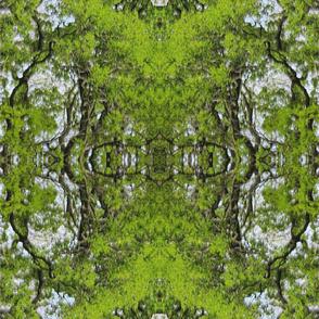 Forest_impression