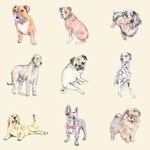 Dogs on cream (medium)