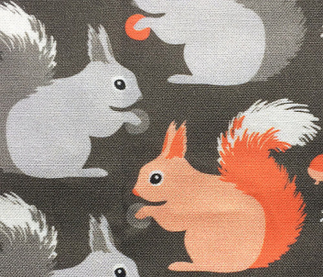 Squirrels (on earth)