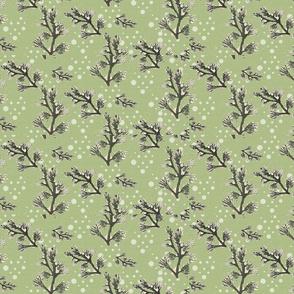 Pine_branch_snow