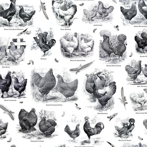 Poultry Envy White Black Toile