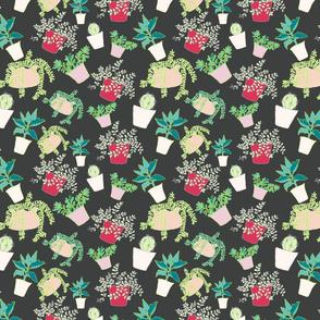 Succulent Collection
