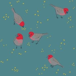 charm of finches 1