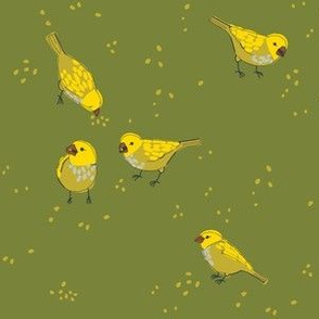 charm of finches 3