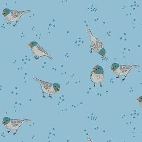 charm of finches 5