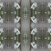 Onion_Weed_Pattern