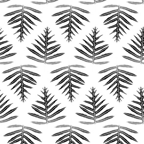 Fern Array Black on White 150