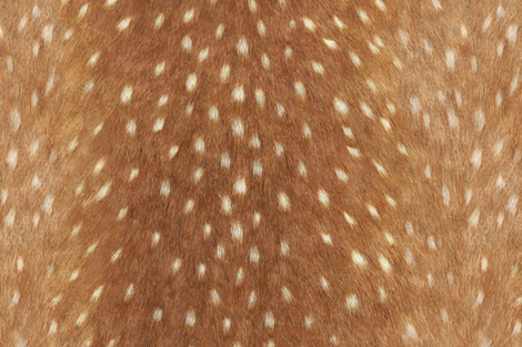 Soft Deer Hide // Spring Fawn fabric by willowlanetextiles on Spoonflower - custom fabric