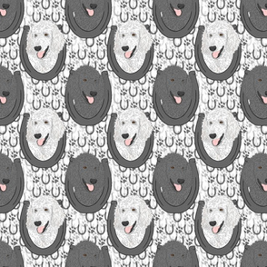 Standard Poodle horseshoe portraits