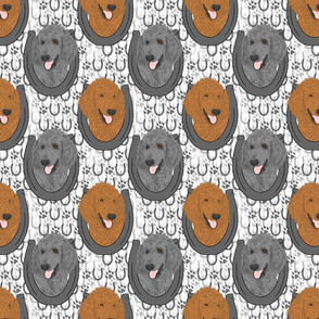 Standard Poodle horseshoe portraits B