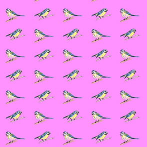 Bluetits on Pink