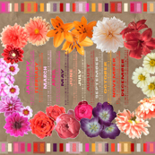 2017 Photo Flowers Calendar