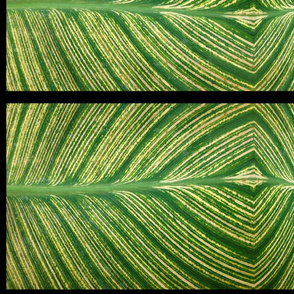 IMG_0421_canna_leaf_panel_lower_res