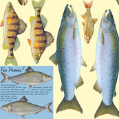 Fish plushies - perch, salmon, bass, whitefish, trout, sunfish, sturgeon, steelhead, walleye, pickerel, smelt