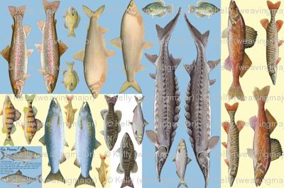Fish plushies - perch, salmon, bass, whitefish, trout, sunfish, sturgeon, steelhead, walleye, pickerel, herring