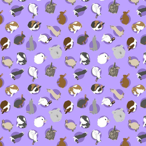 Tiny assorted rabbits - purple