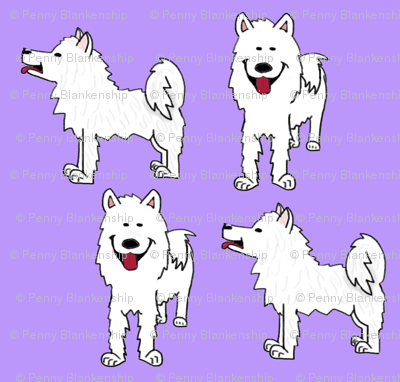 Samoyed on purple