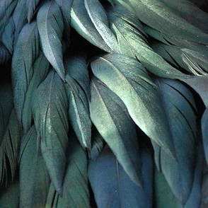 Frigate Bird Feathers