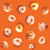 Pumpkin Polka
