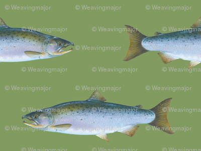 Coho salmon on vintage green