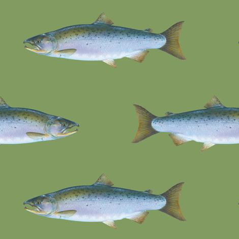 Coho salmon on vintage green fabric by weavingmajor on Spoonflower - custom fabric