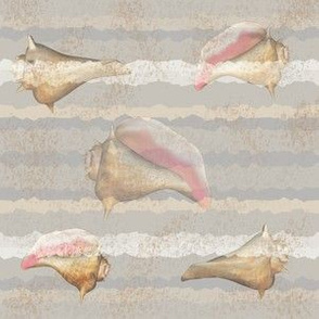 Conch Shells on Sandy Beige