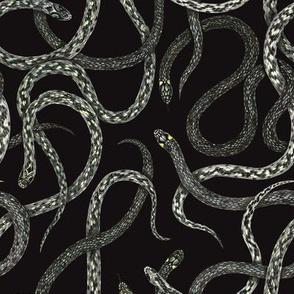 snakes on black