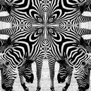 BW_op_art_zebras