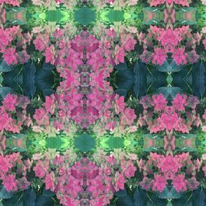 hydrangea fantastic 1
