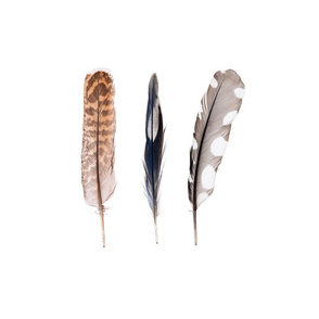 Multi Feather Cushions