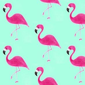 Flamingoish in Aqua