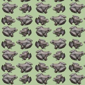 leopard_frogs