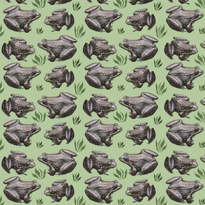 leopard_frogs_3