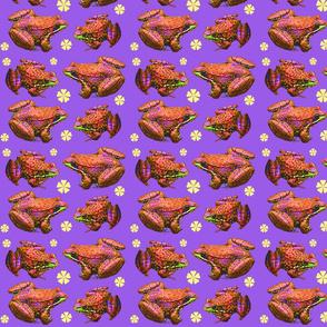 leopard_frogs_6