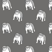 Bulldog gray